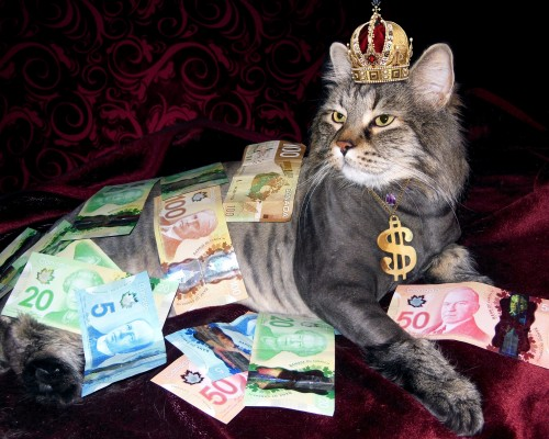 cat wearing a crown covered in Canadian money