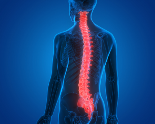 image of a man with the spinal cord visible